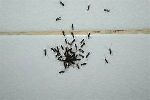 Are ants attracted to your bathroom terminix for Winged ants in bathroom