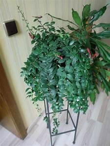 Kuebelpflanzen Winterhart Bluehend : exotische zimmerpflanzen kaufen table basse relevable ~ Whattoseeinmadrid.com Haus und Dekorationen