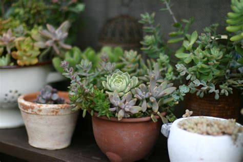 japanese garden pots