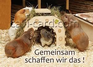 Wir Können Es Nachbauen : meerschweinchen postkarte gemeinsam schaffen wir das ~ Orissabook.com Haus und Dekorationen