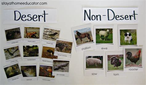desert vs non desert animal sort stay at home educator 602 | Desert Vs. Non Desert Animal Sort Stay At Home Educator