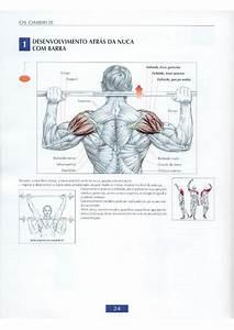 Guia Dos Movimentos De Muscula U00e7 U00e3o