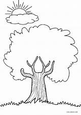 Coloring Pages Tree Trees Printable Cool2bkids Printables Sheets Apple Different Drawing Palm Simple Clipart Shades Adult Kindergarten Draw Whitesbelfast Depuis sketch template
