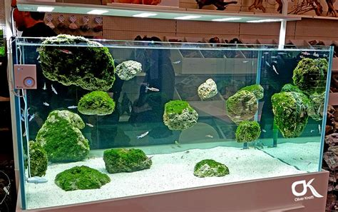 Oliver Knott Aquascaping by Exhibition Tank Interzoo 2014 By Oliver Knott Apsa