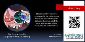 Interactive Ear Diagram Quiz