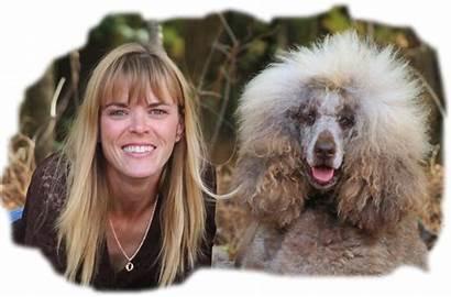 Puppies Poodle Standard Poodles Grey Darlene Tootsie