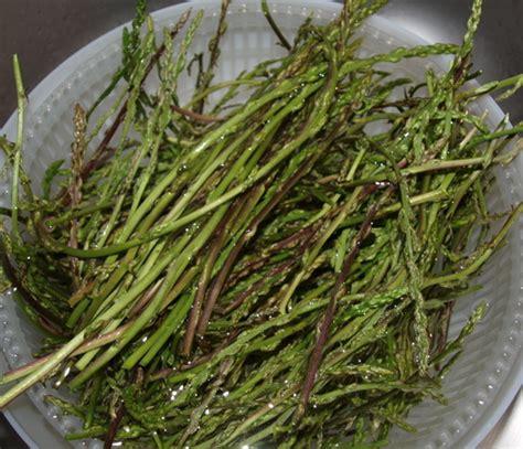 cuisiner des asperges sauvages les asperges sauvages les trouver les ramasser