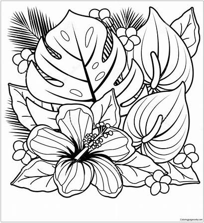 Plants Tropical Pages Flowers Coloring Hibiscus