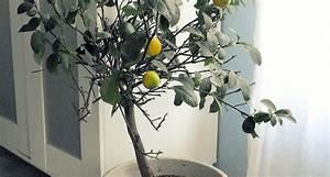 Piante da appartamento resistenti Piante da interno piante resistenti da appartamento