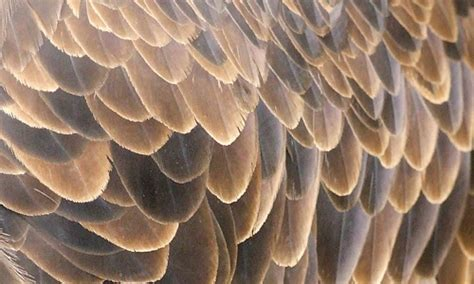 40 Fashionable And Useful Feather Textures For Your Design