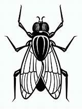 Fly Coloring Fliege Ausmalbilder Printable Malvorlagen Ausdrucken Kostenlos sketch template