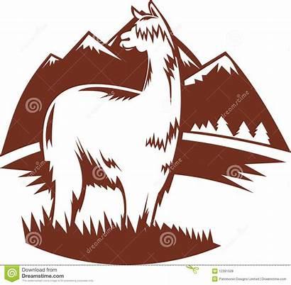 Alpaca Suri Clipart Llama Mountains Illustration Vector