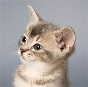 Domestic Cat - Animal Facts and Information