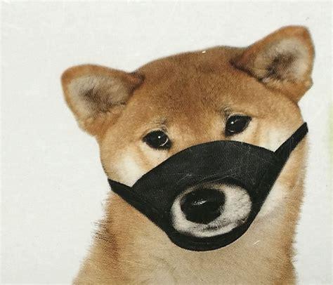 play safe soft dog muzzle