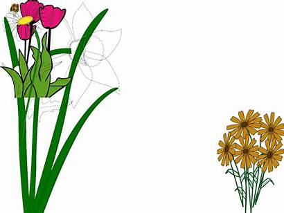 Garden Flower Clipart Flowers Clip Cliparts Spring
