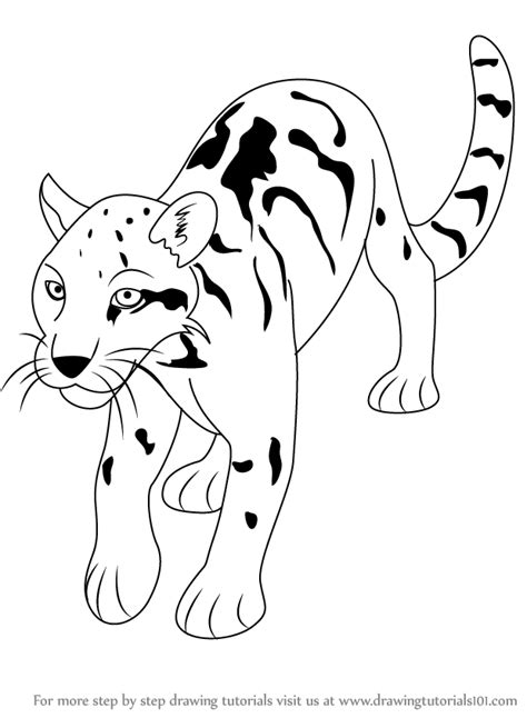 step  step   draw  clouded leopard