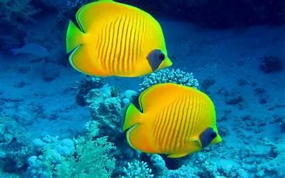 Fish Ocean Underwater Fishes Tropical Coral Reef