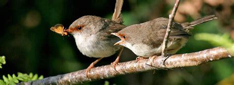 monogamy in garden birds the bird house