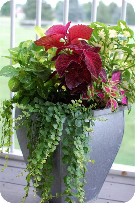 33 Shades Of Green Container Gardening