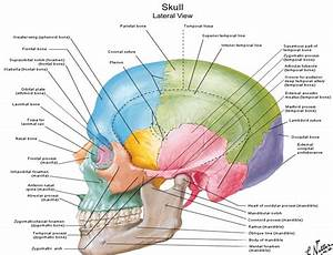 Dentistry Lectures For Mfds  Mjdf  Nbde  Ore  Diagrams Of Anatomy Of Skull With Radiographic Land Marks