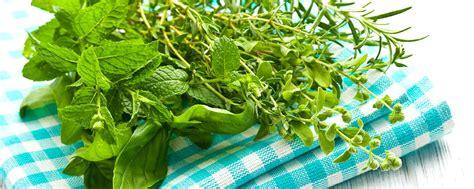 Les Herbes De Provence Et Les Olives