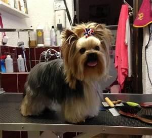 Wie Pflege Ich Hortensien : wie pflege ich meinen yorkshire terrier welpen der blog ~ A.2002-acura-tl-radio.info Haus und Dekorationen