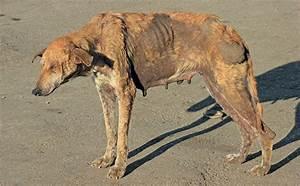 animal health rabies