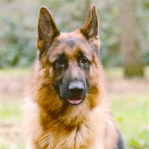 Suņi ar jutīgu gremošanas sistēmu | Pro Plan®