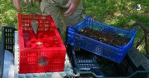 Piege A Frelon : contre le frelon asiatique cet apiculteur invente un ~ Farleysfitness.com Idées de Décoration