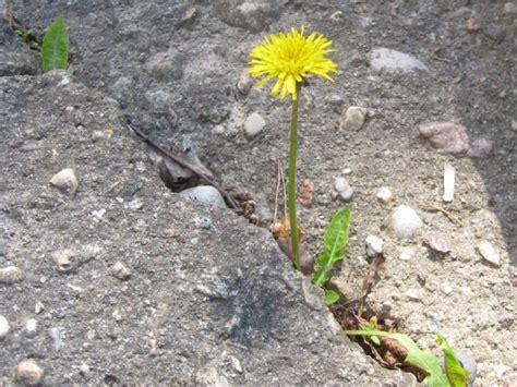 Gyvasis pavasaris - Žavinta