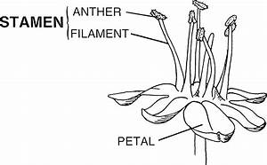 Flashcards - Parts Of The Flower