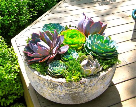 succulent gardens in pots 47 succulent planting ideas with tutorials succulent garden ideas balcony garden web