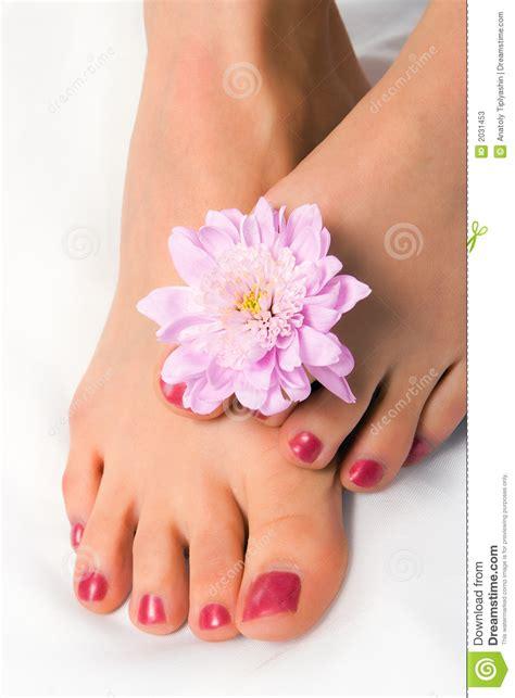 pied de femme avec le chrysanthemum de fleur photos stock image 2031453