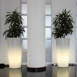 Life, Indoors, Plant, Hire, Is, Perfect, For, Office, Or, Events