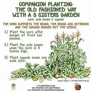 Three Sisters Companion Planting Corn Beans Squash