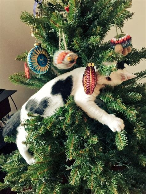 cat first seen christmas tree adorable cats who are excited about trees this way come