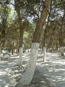 Protection Arbres Fruitiers : protection naturelle contre les parasites des arbres ~ Premium-room.com Idées de Décoration