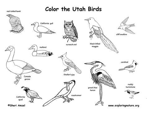 Utah Habitats, Mammals, Birds, Amphibians, Reptiles