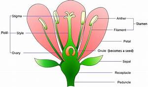 Glossary Of Plants