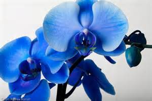 how to care for orchids flower inspirationseek
