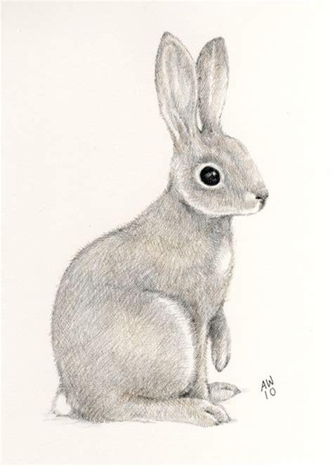 drawn pencil bunny pencil   color drawn pencil bunny