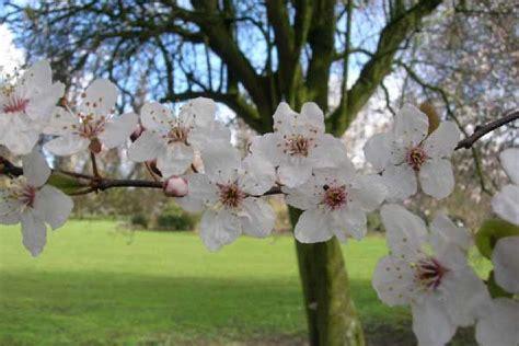 fiori do bach coliche gassose nei neonati naturopataonline