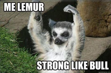 Lemur Meme - pinterest the world s catalog of ideas