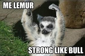 Pinterest • T... Cute Lemur Quotes