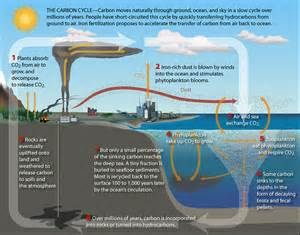 ib the carbon cycle geography