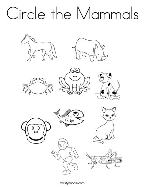 3 letter mammals mammal worksheet worksheets for all and 28571