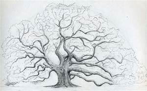 Acorn Tree Drawing | www.pixshark.com - Images Galleries ...