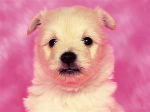 Cute Puppy Dog Wallpaper | Wallpaper ME