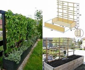 Garten Sichtschutz Pflanzen : deko ideen welche pflanzen als sichtschutz f r garten und terrasse tipps und arten ~ Watch28wear.com Haus und Dekorationen