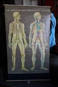 Nervous System Anatomical Chart A Framed Medical Illustration Of An American Frohse